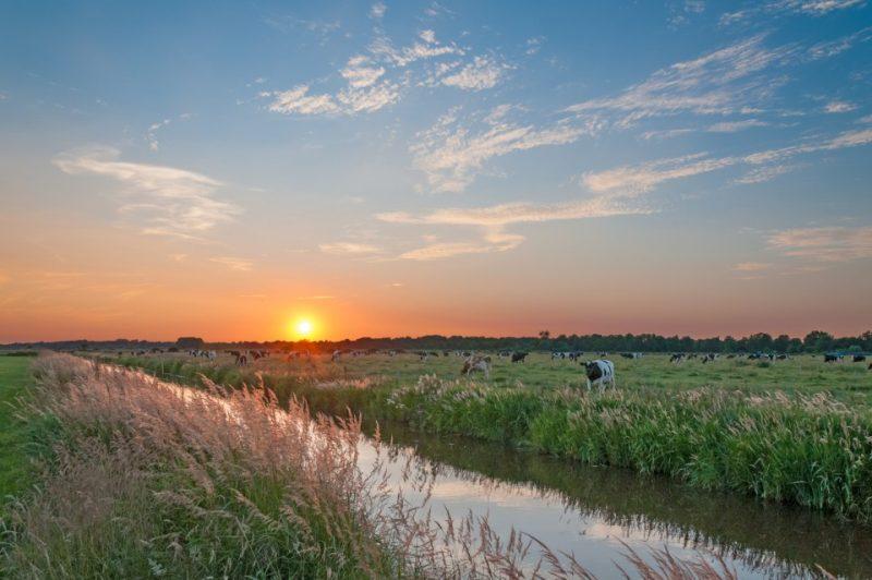 Ostfriesland Weide im Sonnenuntergang