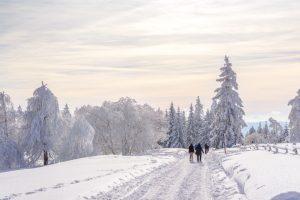 Spaziergang durch die verschneite Winterlandschaft