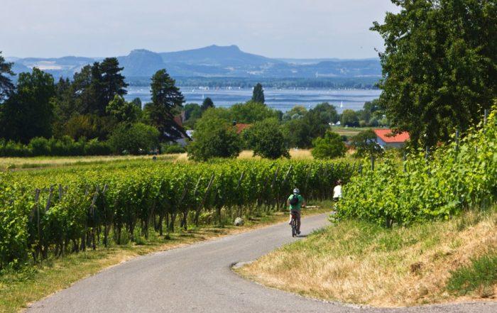 Radfahrer fahren durch Weinberge zum See - Bodensee-Radweg