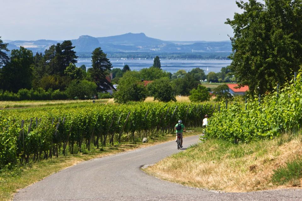 Radfahrer fahren durch Weinberge zum See - Bodensee