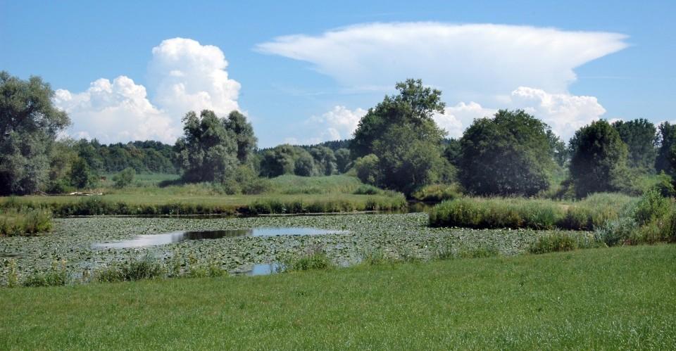 Teich am Wald in der Ferienregion Rottal-Inn