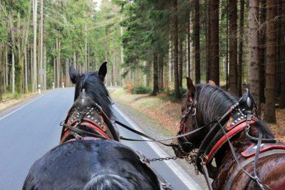 Pferde-Gespann durch das Erzgebirge