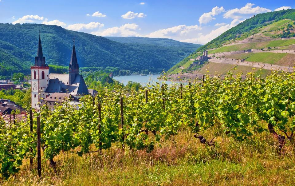 Ausblick Rheinhessen