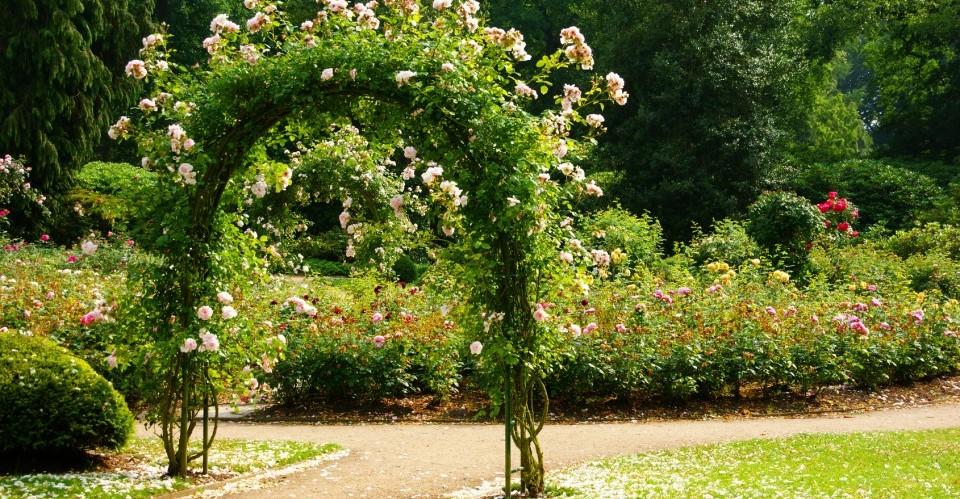 Rosenbogen im Park vom Friedhof Ohlsdorf in Hamburg