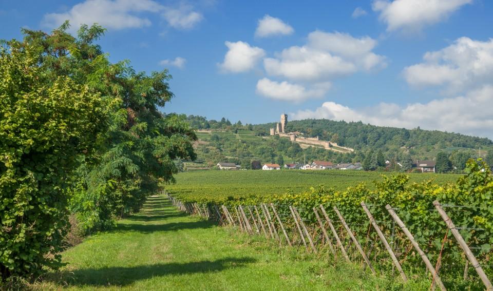 Weinort Wachenheim an der Weinstrasse mit Ruine Wachtenburg