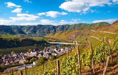 Steillagen bei Neef an der Mosel im Spätsommer - Weinbaugebiet Mosel