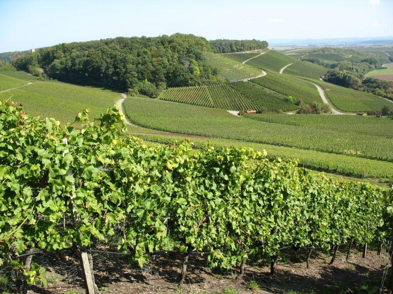 Weinberge in der Region Stromberg - Heuchelberg im Neckartal