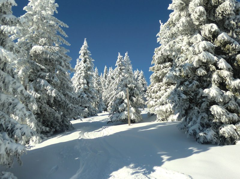 Hochschwarzwald im Winter, verschneite Tannen