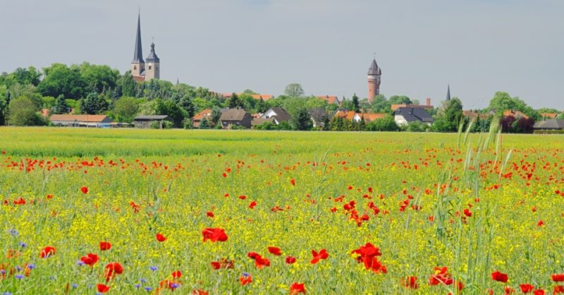 Blick auf Burg bei Magdeburg