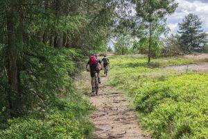 Mit dem Mountainbike durchs Fichtelgebirge