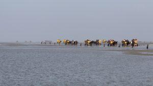 Mit der Pferdekutsche durchs Wattenmeer