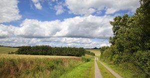 Feldweg durch sommerliche Weizenfelder