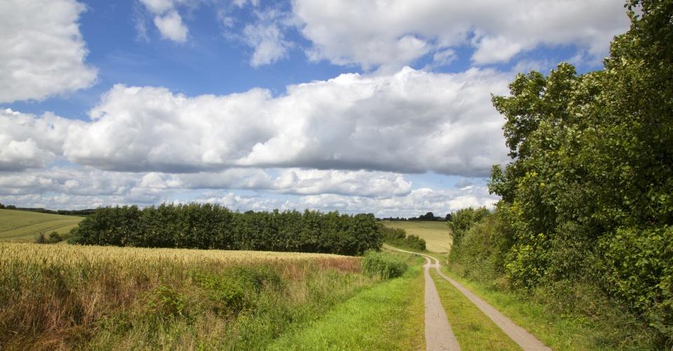 Feldweg durch sommerliche Weizenfelder in der Region Angeln