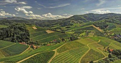 Weinberge im Sommer Im Ortenaukreis, Baden-Württemberg