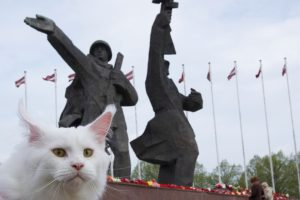 Cats in Riga, Latvia