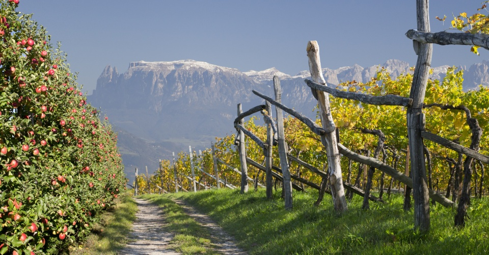 Weinberg im Vinschgau