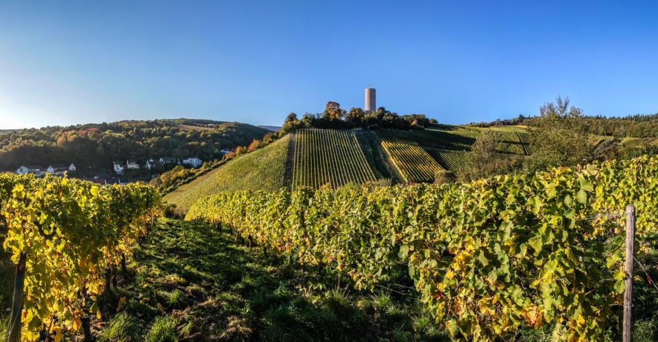 Burg Scharfenstein bei Kiedrich im Weinbaugebiet Rheingau