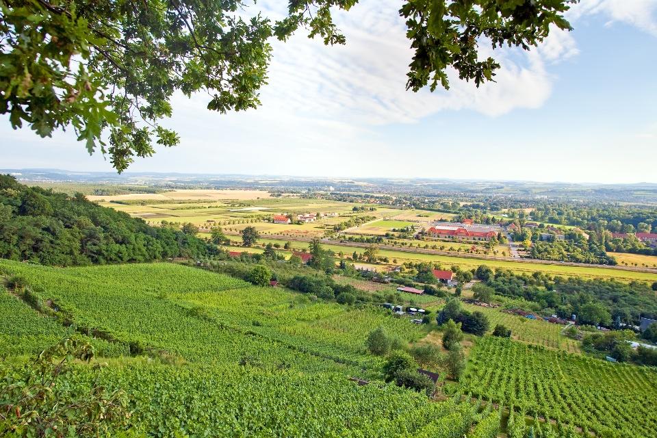 Weinberge in Sachsen - Urlaub im Sächsischen Elbland