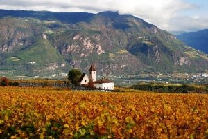 herbstlicher Weinberg in Südtirol