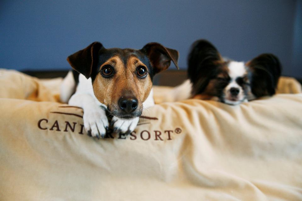 Gast im Canis Resort