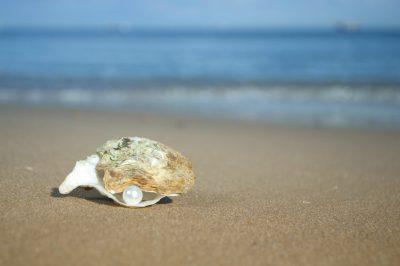 Auster am Strand