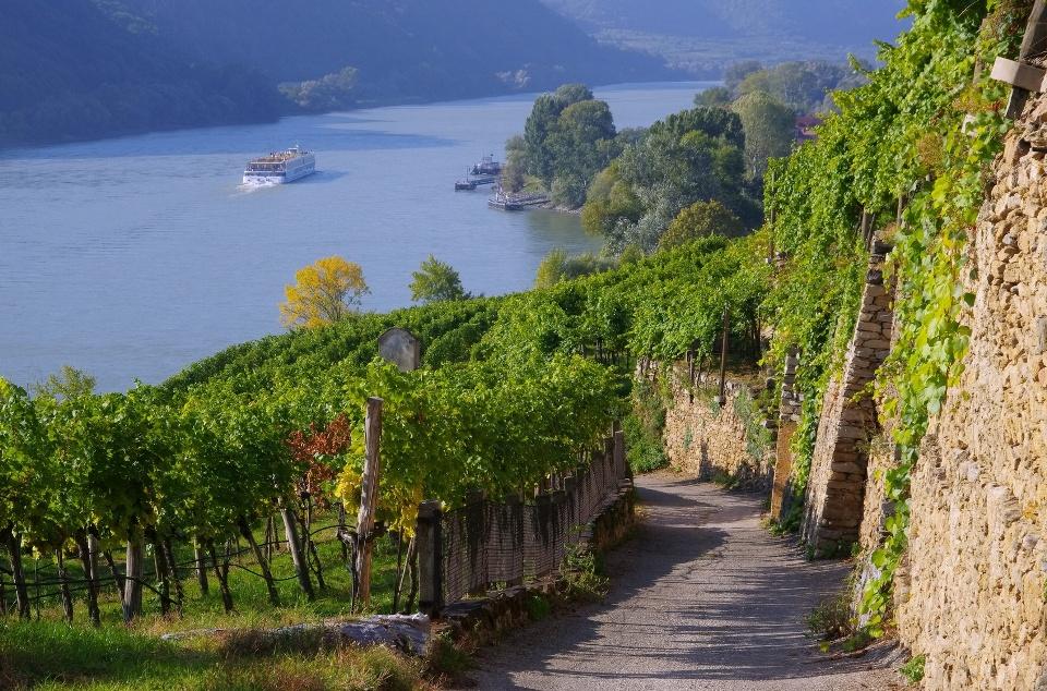 Weinberg in der Wachau an der Donau bei Melk