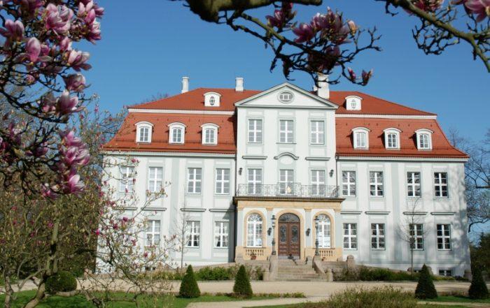 Schloss Güldengossa Magnolia Baum