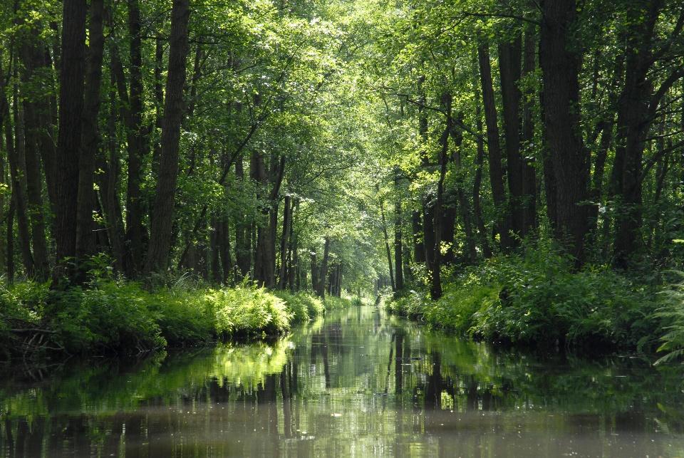 Der Spreewald: Mit dem Kanu durch Auwälder