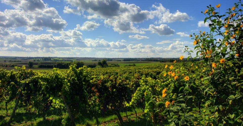 Weinland Rheinhessen im Sommer