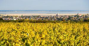 Weingärten am Neusiedlersee bei Mörbisch und Rust