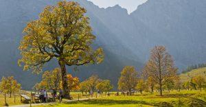 Goldener Herbst im Karwendel