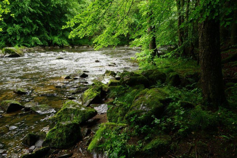 Urwald Bayerischer Wald - Wandern auf dem Böhmweg