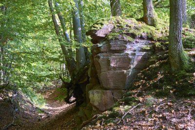 Hohlweg im Steigerwald bei Oberschwarzach, Unterfranken