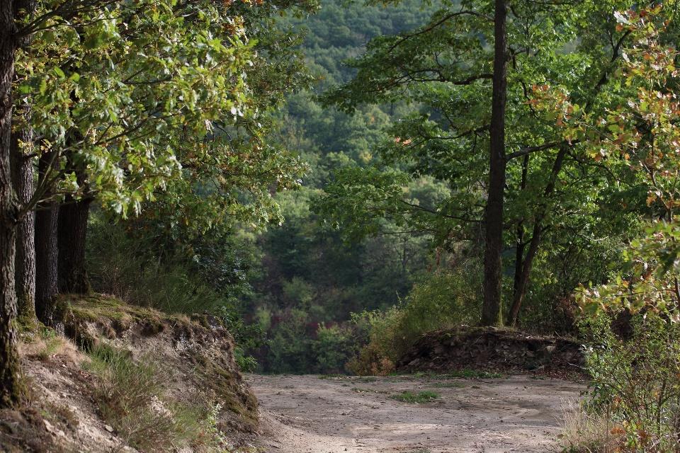 Wanderweg im Steigerwald