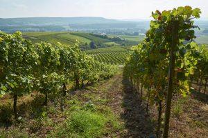 Weinberge im Steigerwald bei Oberschwarzach, Unterfranken