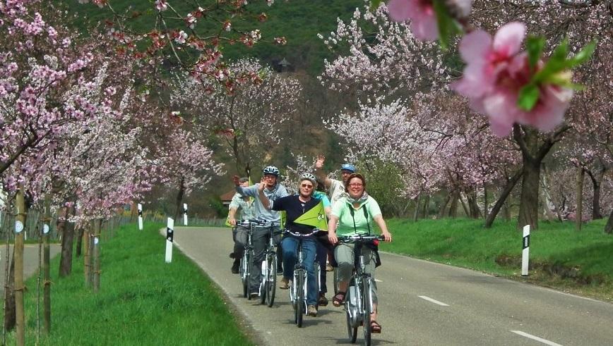 Radeln in der Südpfalz am Hotel zur Pfalz