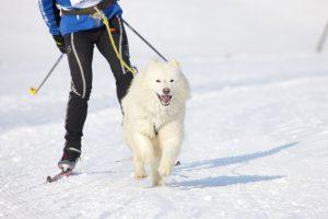 Skijöring mit Hund, Wintersporttrends