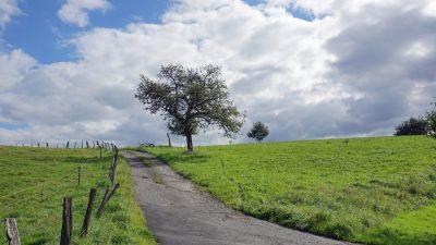 Apfelbaum am Feldweg