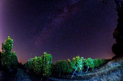 Weinberge bei Nacht