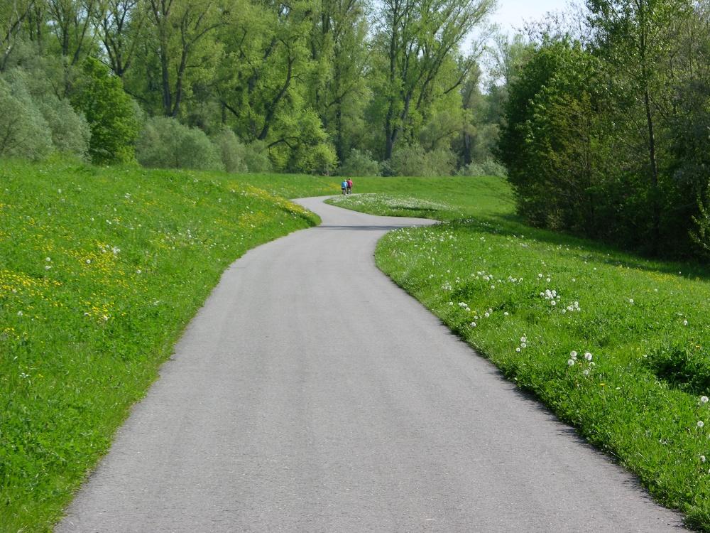 Radwanderweg in den Rheinauen