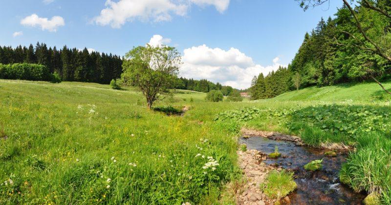 Kanzlersgrund im Thüringer Wald