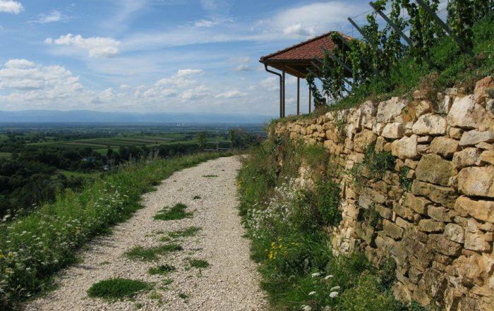Vom Castellberg aus hat man einen herrlichen Blick über das nördliche Markgräflerland