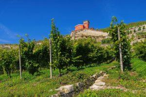 Weinberge im Gebiet Saale-Unstrut