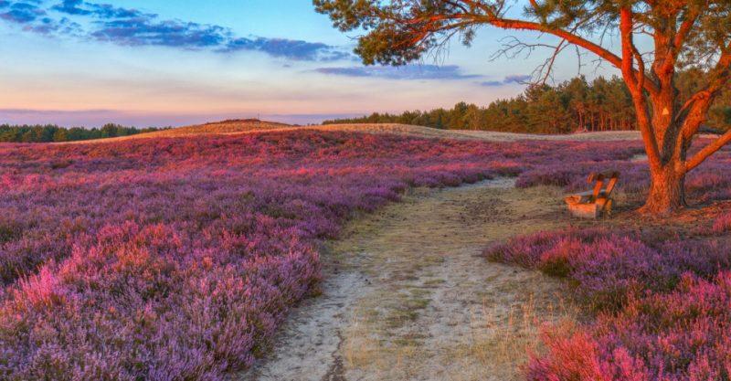 Sonnenuntergang im August im Naturschutzgebiet Nemitzer Heide