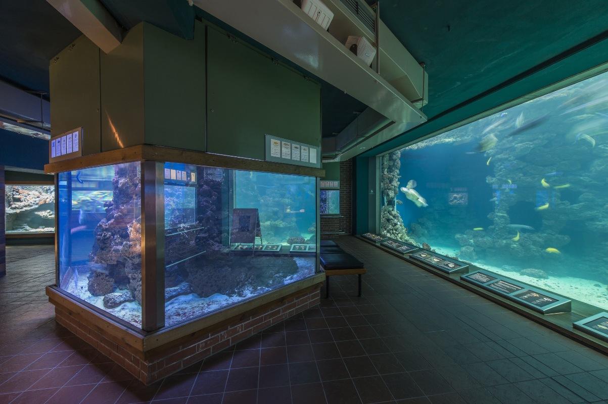 Deutsches Meeresmuseum Stralsund, Aquariengewölbe