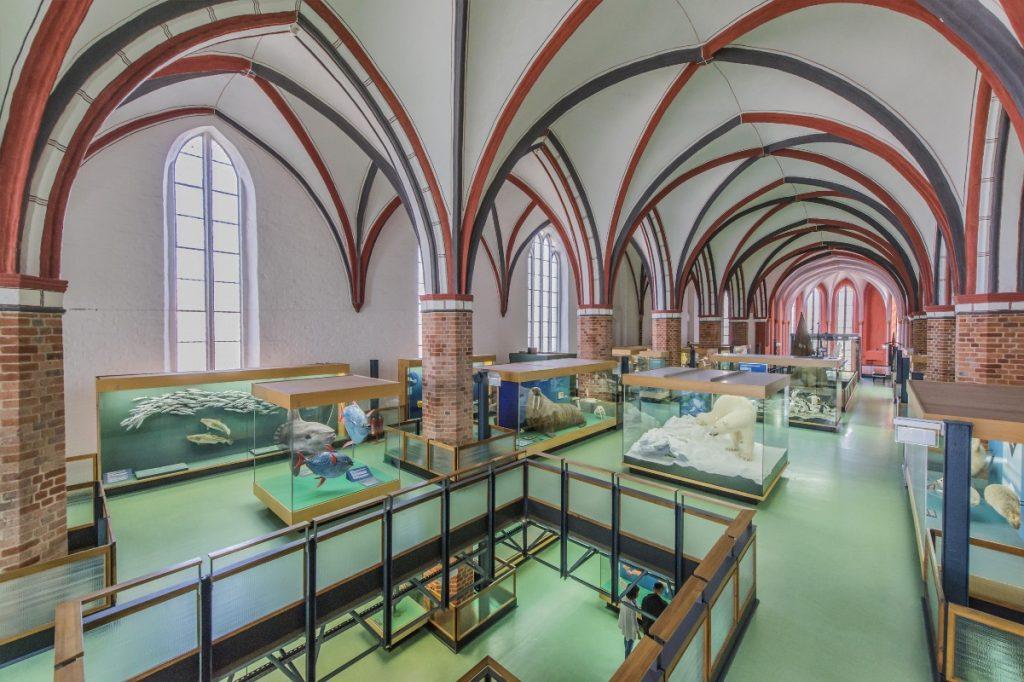 Deutsches Meeresmuseum Stralsund, Ausstellungshalle