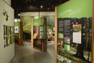 Müritzeum, Ausstellung