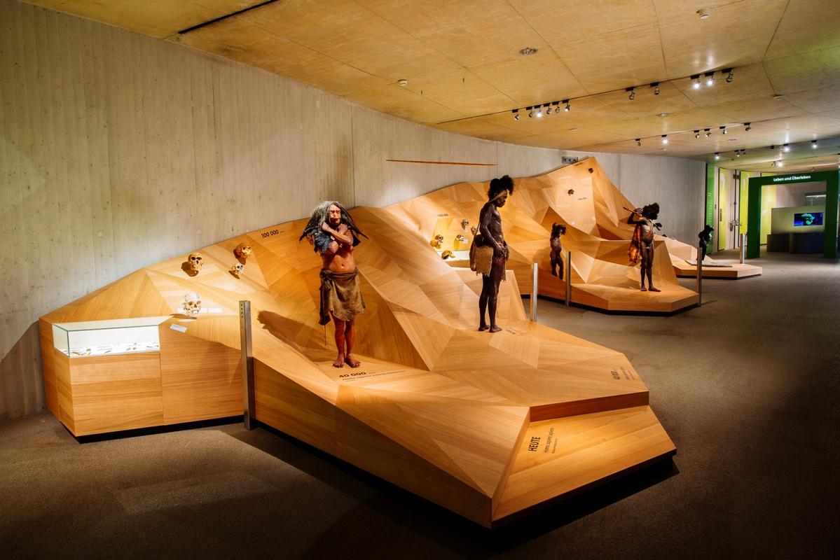 Neanderthal Museum, Stammbusch