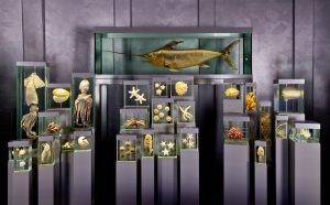 Ozeaneum, Ausstellung
