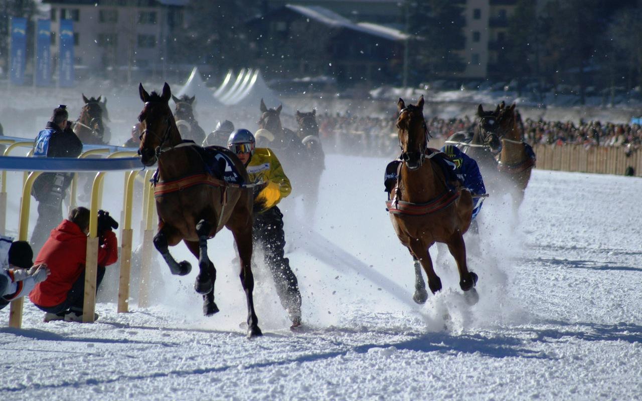 Skikjöring Pferderennen in St. Moritz